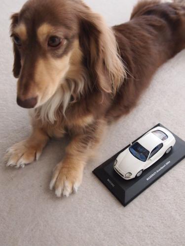2010 グラスポ ミニカー 005.JPG