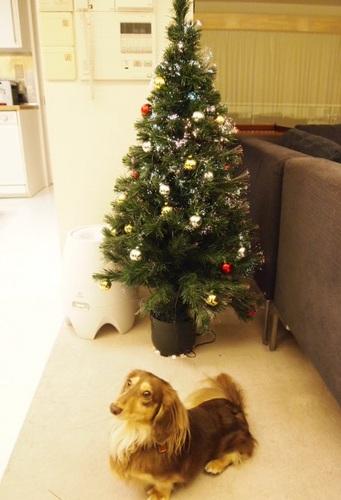 2010 クリスマス 003.JPG