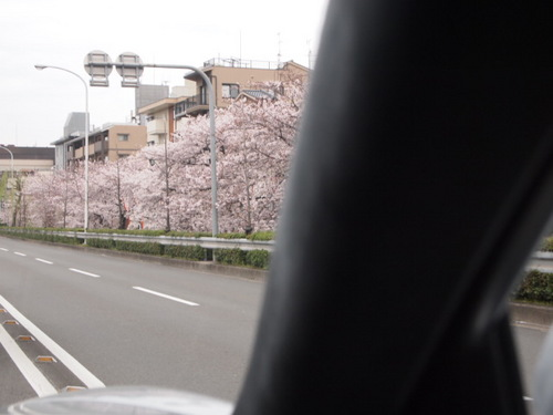 2011 喜寿 006.JPG