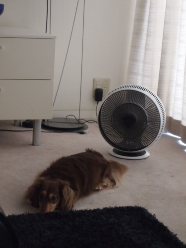 ベルナ 扇風機 001.JPG