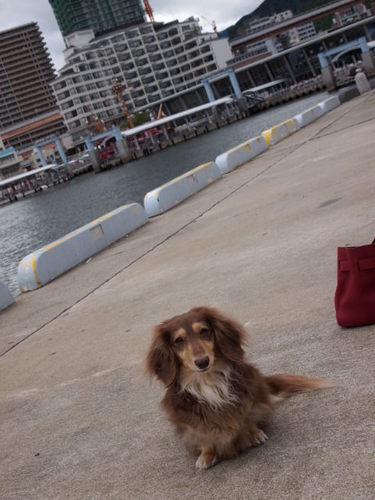 ベルナと散歩 021.JPG