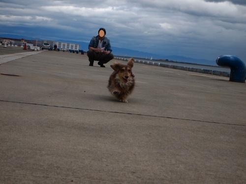 ベルナと散歩 025.JPG